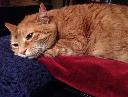 Our kitty, Karma