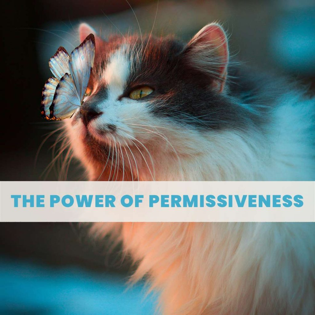 The Power of Permissiveness: a cat is pictured being permissive of a butterfly resting on its nose